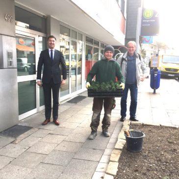 Frühjahrskur für das Baumbeet an der Heisinger Straße